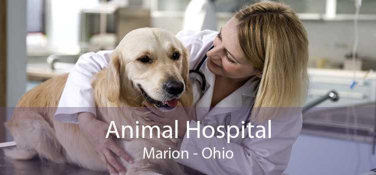 Animal Hospital Marion - Ohio