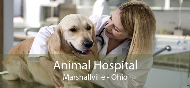 Animal Hospital Marshallville - Ohio