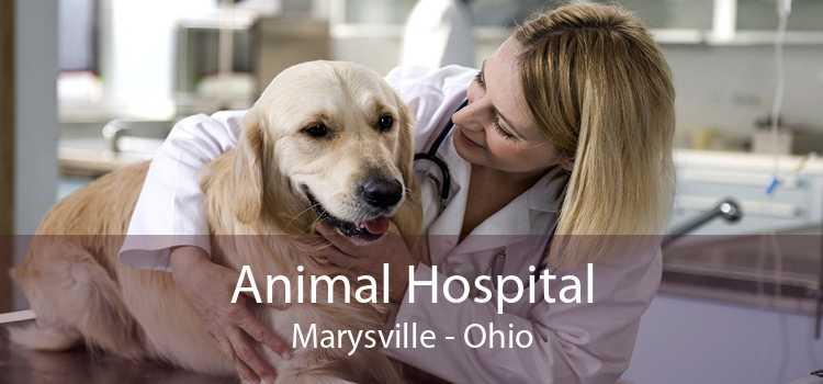 Animal Hospital Marysville - Ohio