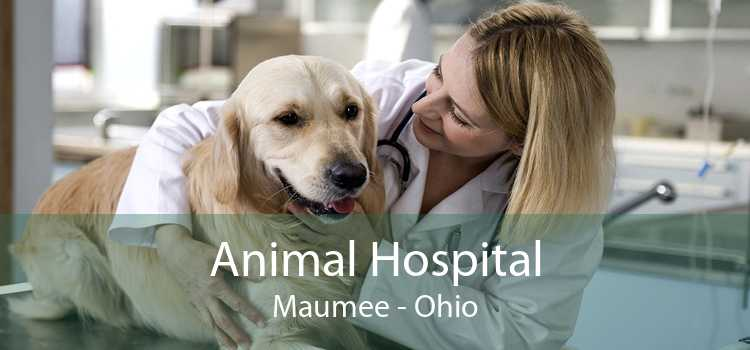 Animal Hospital Maumee - Ohio