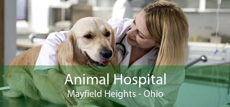 Animal Hospital Mayfield Heights - Ohio