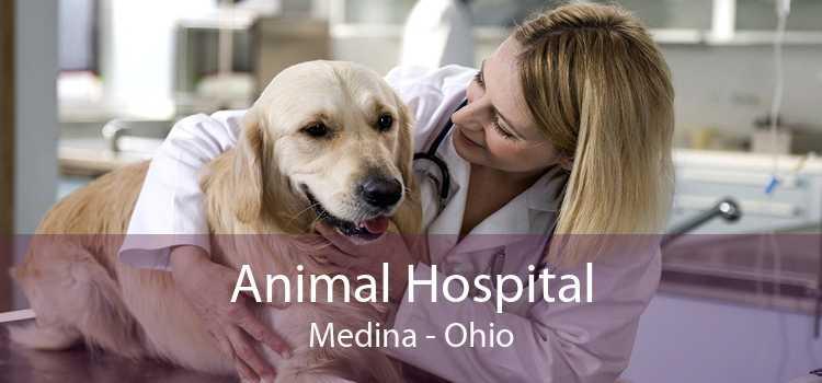 Animal Hospital Medina - Ohio