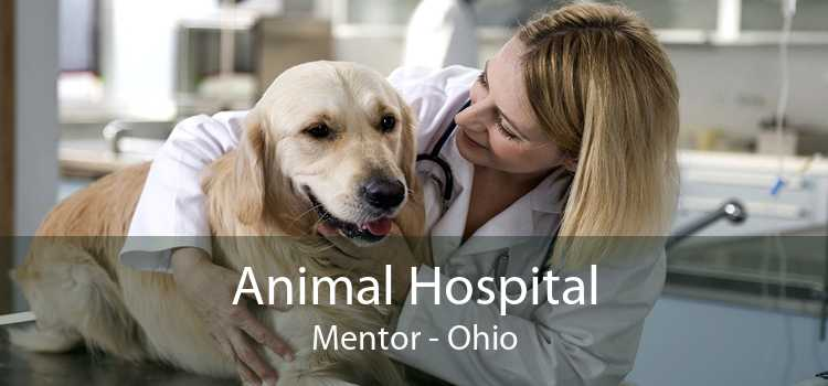 Animal Hospital Mentor - Ohio