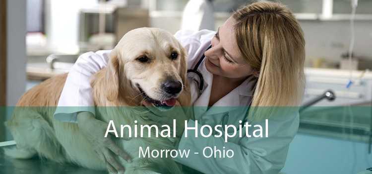 Animal Hospital Morrow - Ohio