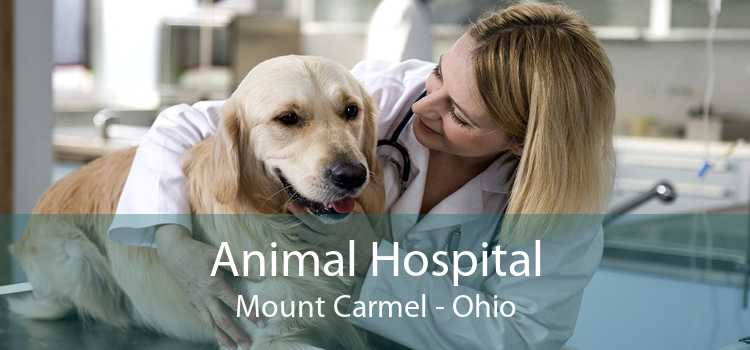 Animal Hospital Mount Carmel - Ohio