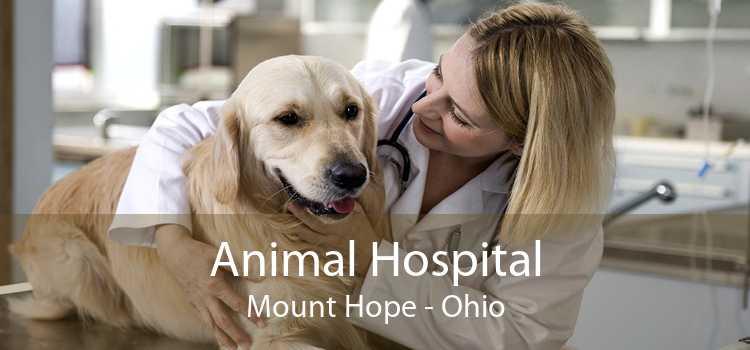 Animal Hospital Mount Hope - Ohio