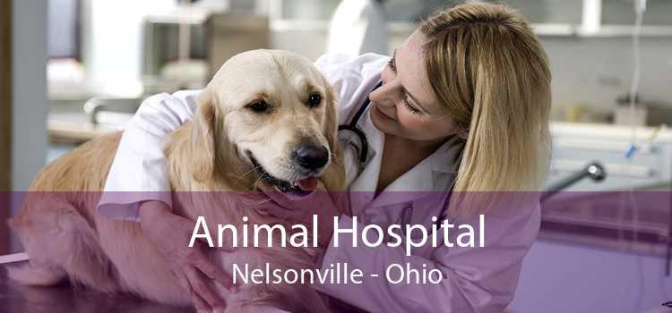 Animal Hospital Nelsonville - Ohio