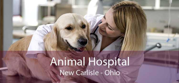 Animal Hospital New Carlisle - Ohio