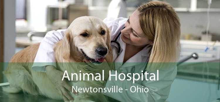 Animal Hospital Newtonsville - Ohio
