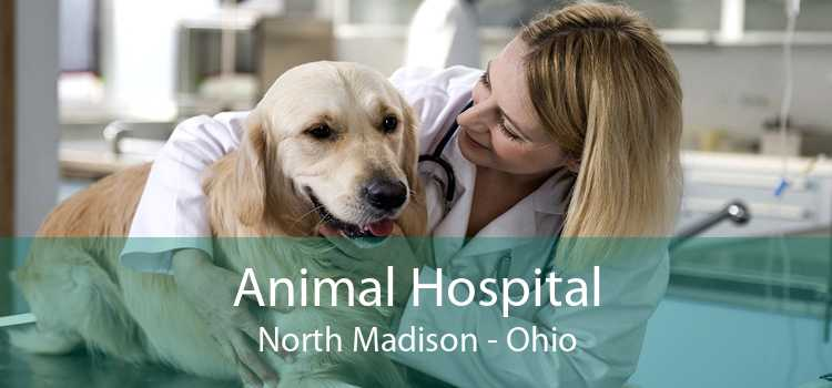 Animal Hospital North Madison - Ohio