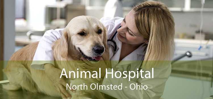 Animal Hospital North Olmsted - Ohio