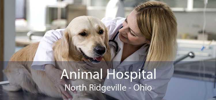 Animal Hospital North Ridgeville - Ohio