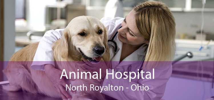Animal Hospital North Royalton - Ohio