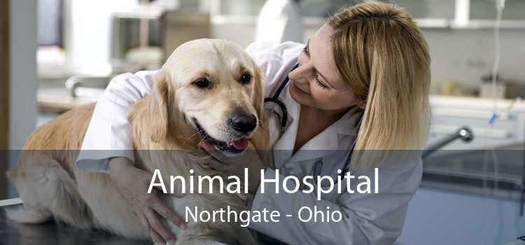 Animal Hospital Northgate - Ohio