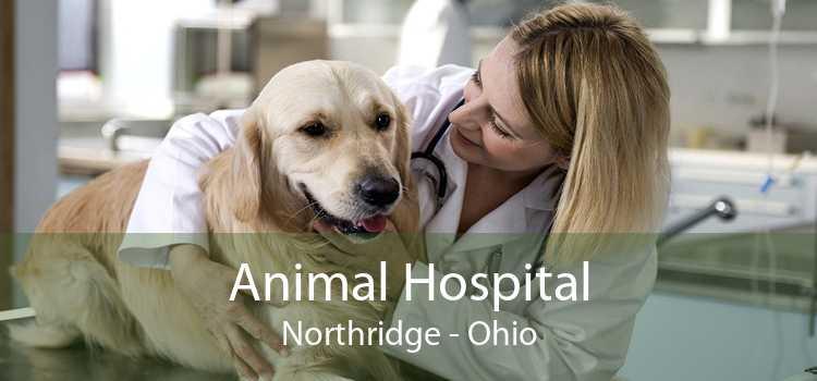 Animal Hospital Northridge - Ohio