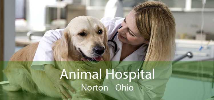 Animal Hospital Norton - Ohio