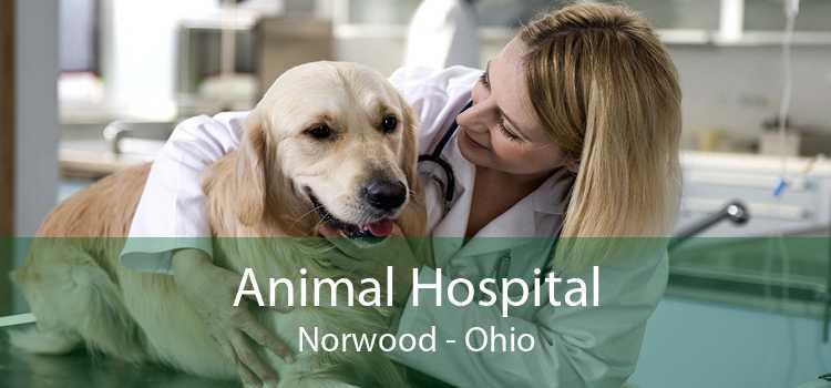 Animal Hospital Norwood - Ohio