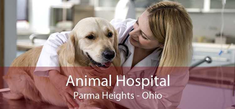 Animal Hospital Parma Heights - Ohio