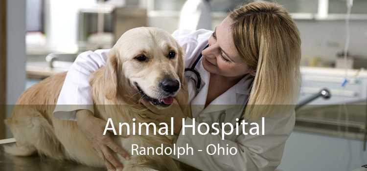 Animal Hospital Randolph - Ohio