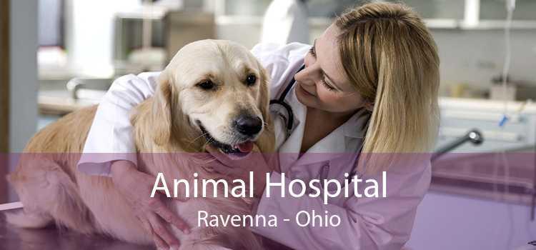 Animal Hospital Ravenna - Ohio