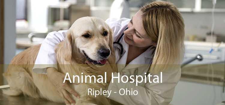 Animal Hospital Ripley - Ohio