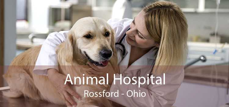 Animal Hospital Rossford - Ohio