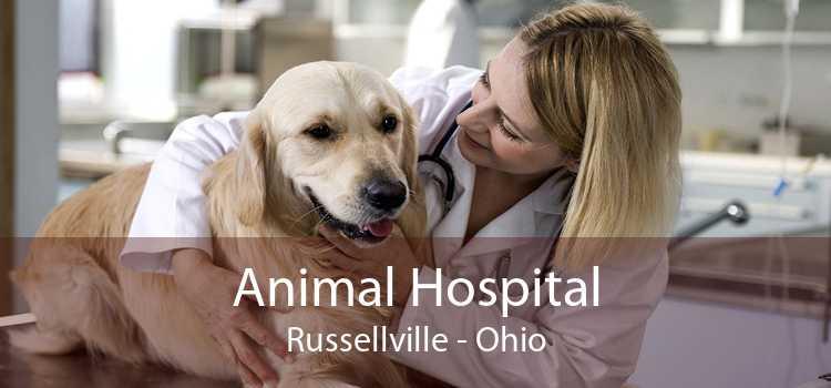 Animal Hospital Russellville - Ohio
