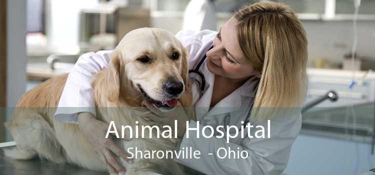 Animal Hospital Sharonville - Ohio