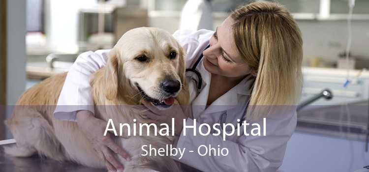 Animal Hospital Shelby - Ohio