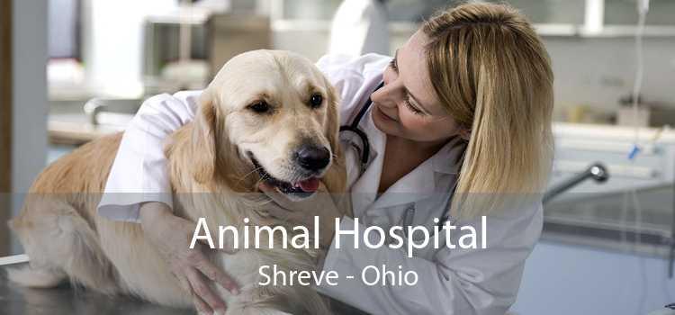 Animal Hospital Shreve - Ohio