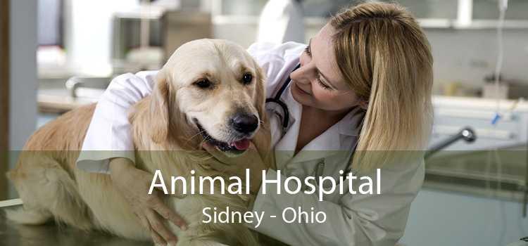 Animal Hospital Sidney - Ohio