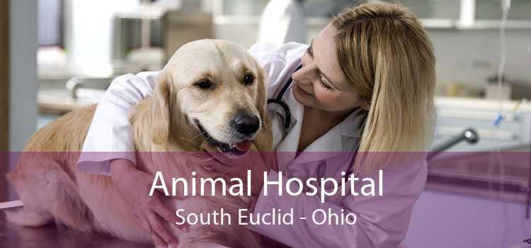 Animal Hospital South Euclid - Ohio