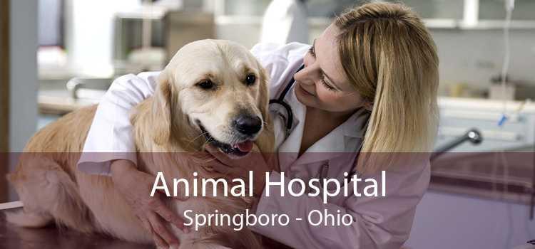 Animal Hospital Springboro - Ohio