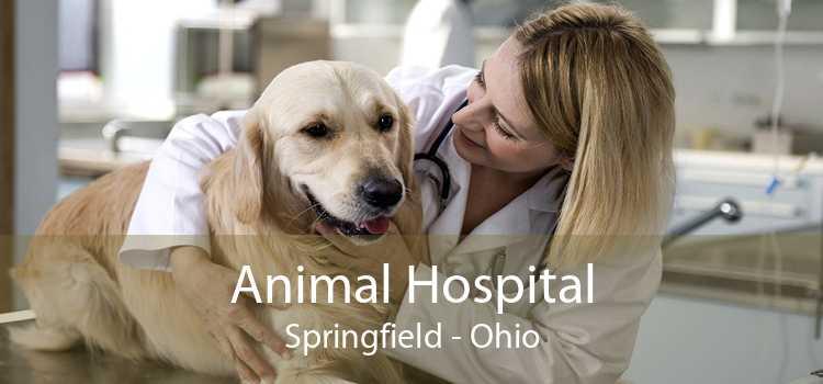 Animal Hospital Springfield - Ohio