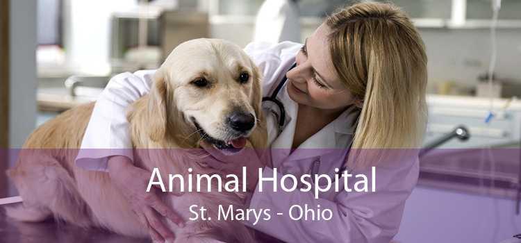 Animal Hospital St. Marys - Ohio