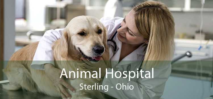 Animal Hospital Sterling - Ohio