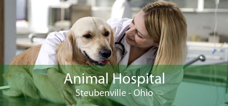 Animal Hospital Steubenville - Ohio