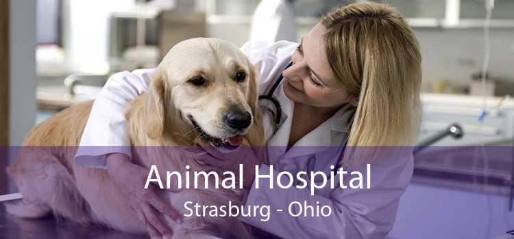 Animal Hospital Strasburg - Ohio