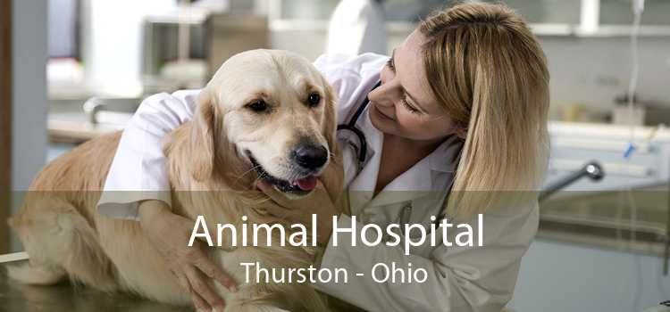 Animal Hospital Thurston - Ohio