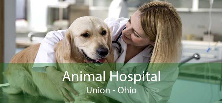 Animal Hospital Union - Ohio