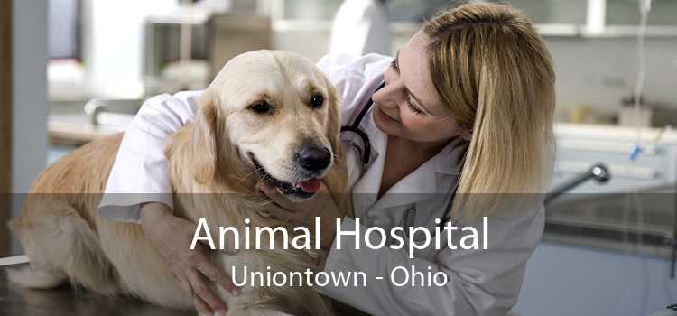 Animal Hospital Uniontown - Ohio