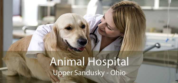 Animal Hospital Upper Sandusky - Ohio