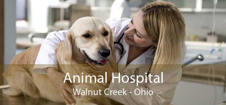 Animal Hospital Walnut Creek - Ohio