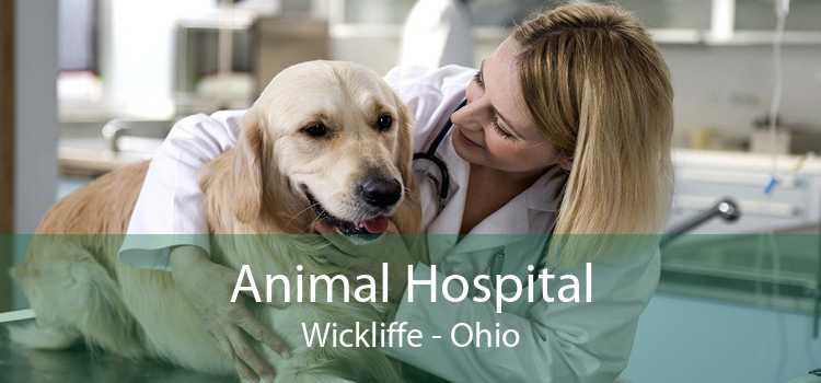 Animal Hospital Wickliffe - Ohio