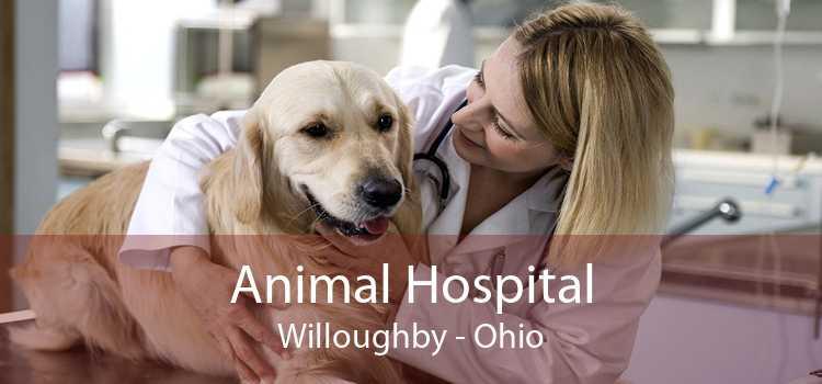 Animal Hospital Willoughby - Ohio
