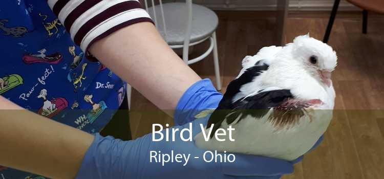 Bird Vet Ripley - Ohio