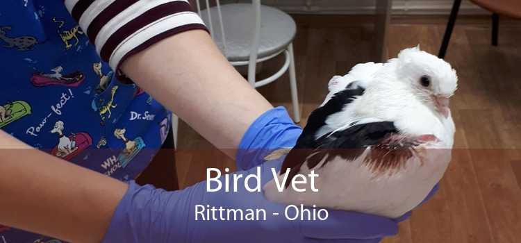 Bird Vet Rittman - Ohio