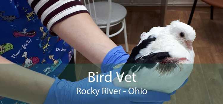 Bird Vet Rocky River - Ohio