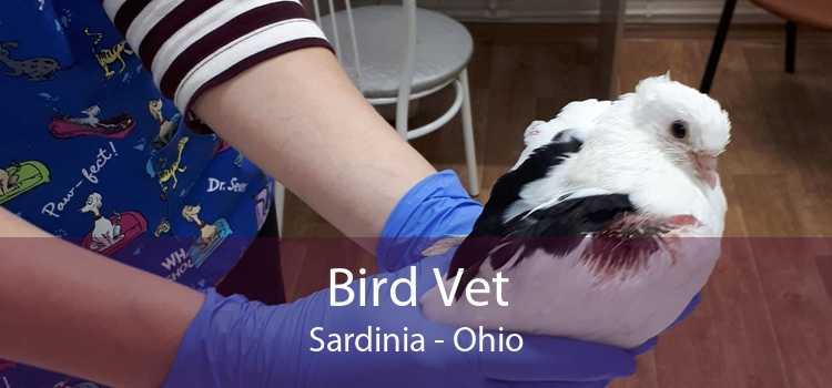 Bird Vet Sardinia - Ohio
