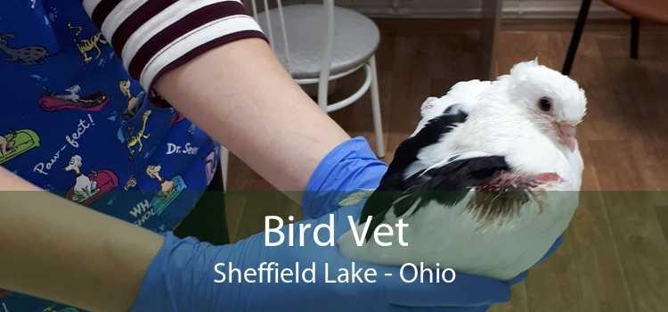 Bird Vet Sheffield Lake - Ohio